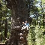 Forêt d'aricaucias, deuxième rando ... 16kms