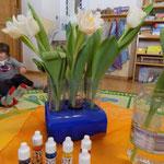 Experiment Tulpen färben