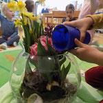 Wir gießen jeden Tag fleißig unsere Frühjahrsblumen