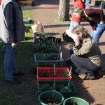 Pflanzenmarkt in Sandkrug