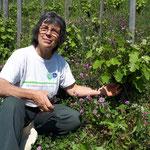 nettoyage des pieds de vigne