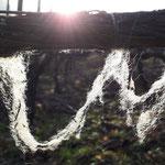 souvenir des moutons sur les fils des treilles