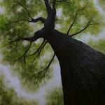 Baum (Öl auf Hdf 50x40)