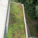 Sandrainstrasse, Bern - begrüntes Dach voll Unkraut