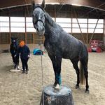 Horseagility 01.12.2019