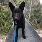 4,5 Monate alt, Hängebrücke kein Problem