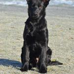 4 Monate alt, Renox