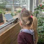 Besuch der Schmetterlings Ausstellung im Botanischen Garten in München