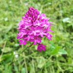 encore une orchidée