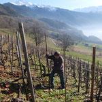 restructuration de vigne