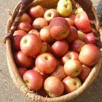 les pommes de la ferme de la Simonnière