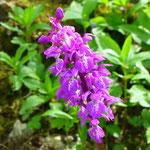 Flora und Fauna am Wegesrand
