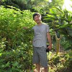 野生のホーリーバジルと言われるヴァナトゥルシー。沖縄では多年草になります。