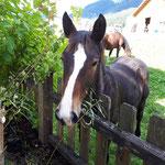 Pferd des Nachbarbauern direkt am Gartenzaun