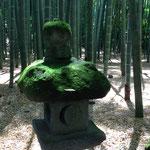 2015年5月 鎌倉 報国寺
