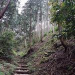 ③植林地の中を歩き易い道が続く