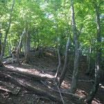 3. 雑木林のいい尾根が続く。