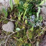 Frühlingsdekoration Friedhof