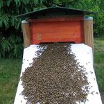 Einlogieren in die Bienenkiste - 2018