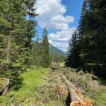 Holzrücken mit Steyr 6190 CVT und Seilwinde Chalberläger