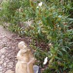 Dans le jardin - Bouquet de Flammes -