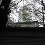 東急大井町線荏原町駅すぐのさいとう整体近くの旗岡八幡神社の桜