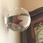 5 formas de decorar tus muros en casa