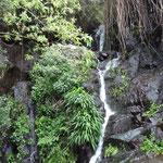 La Gomera, Wasserfall, 2016-02