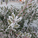 Calme d'hiver / Au mas de Janita ©