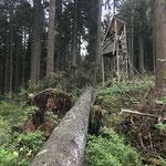 Auch zahlreiche Hochsitze wurden durch die Winterstürme Sabine und Bianca zerstört_Titisee-Neustadt_05-2020