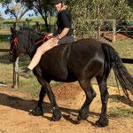 Ros und Pferd