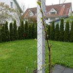 Kletterhilfe Pflanzen Chromstahl