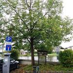 """... und entdecken den """"Baum der Einheit"""""""
