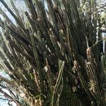 riesen Kaktus, der hat bestimmt schon viel gesehen