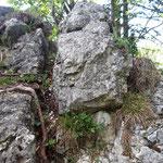 Je näher wir dem Gipfel kommen, desto mehr eindrucksvolle Felsen ragten am Wegrand auf