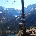 Gipfelbaum am Vorderen Signalkogel