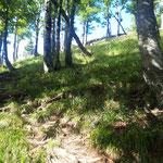Letzter Anstieg durch den Wald, bevor wir den Grat erreicht hatten