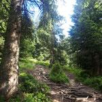 ....und zum Schloss noch einmal kurz durch den Wald