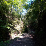 Wegverlauf auf der Forststraße durch den Wald