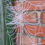 Spinnweben können sooo schön sein *g* !
