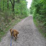 Mai`20 - in der Kirchdorfer Heide ....