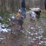 Dann geht`´s los in den Wald .......
