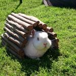 Kaninchen Alaska