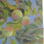 VERKOCHT appels in paars I  40x50cm  olie op linnen. 2019.   ingelijst in baklijst,