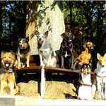 Ace, Duke, Stopper, Kalle und Trudi