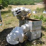 Mise en place d'un rucher