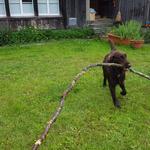 Ela am Holzsammeln