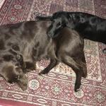 Brownie und Paige