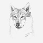 Рисунок карандаш, Асти.