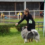Mit Abby (Wolfsspitz) im Ring, Aarau CH 2016